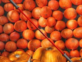 Fringe Sport 20kg Pumpkin Spice Barbell main